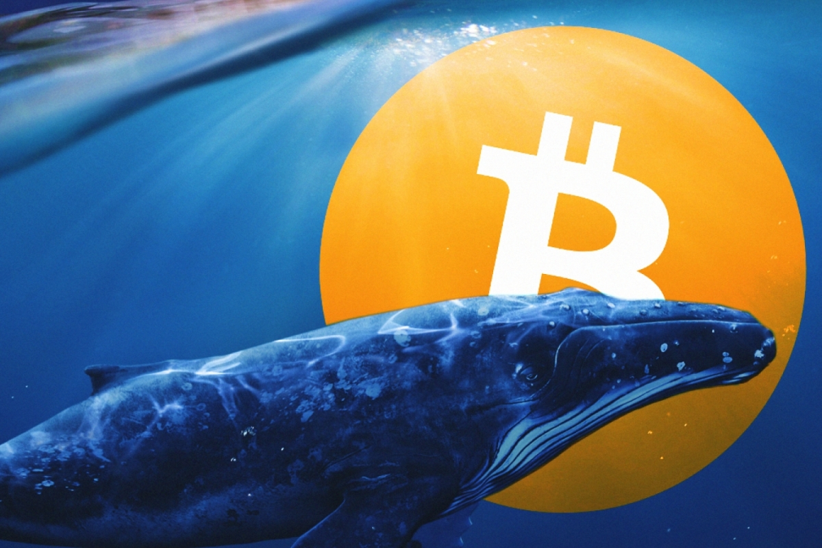 Crypto Whale